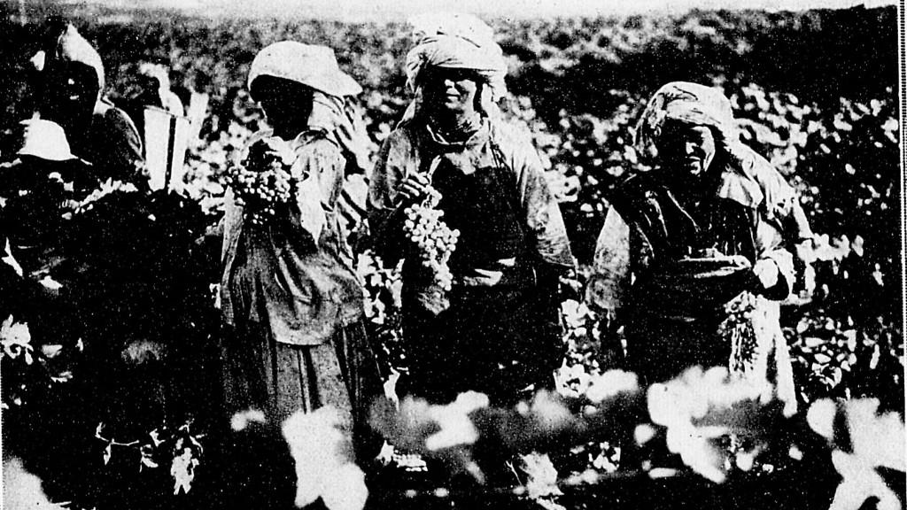 vendanges 1930